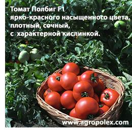 Сортовая характеристика томата полбиг