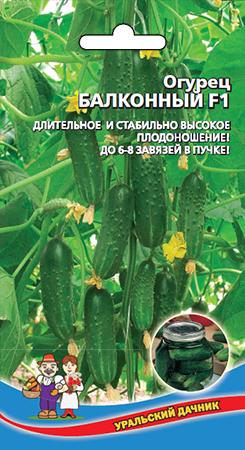 Самоопыляемые сорта огурцов для балкона: обзор лучших балконных огурчиков и советы по их выращиванию
