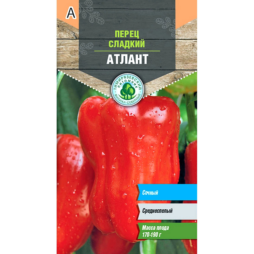 Сорт перца атлант: описание и советы по выращиванию