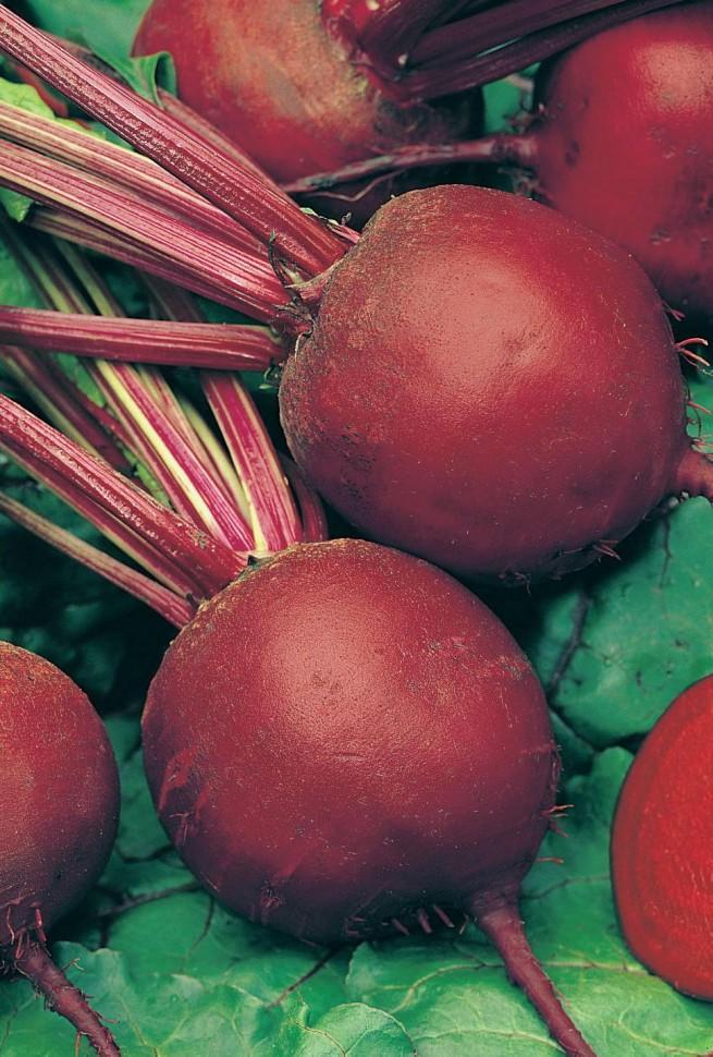 Свекла детройт: описание и характеристика сорта, урожайность с фото