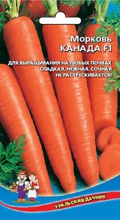 Морковь канада f1: описание сорта, его преимущества и недостатки, рекомендации по выращиванию, уходу, хранению, а также борьбе с болезнями и вредителями