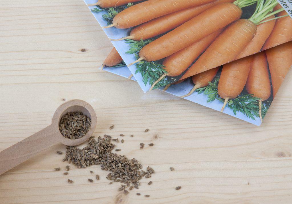 Как вырастить семена моркови самостоятельно