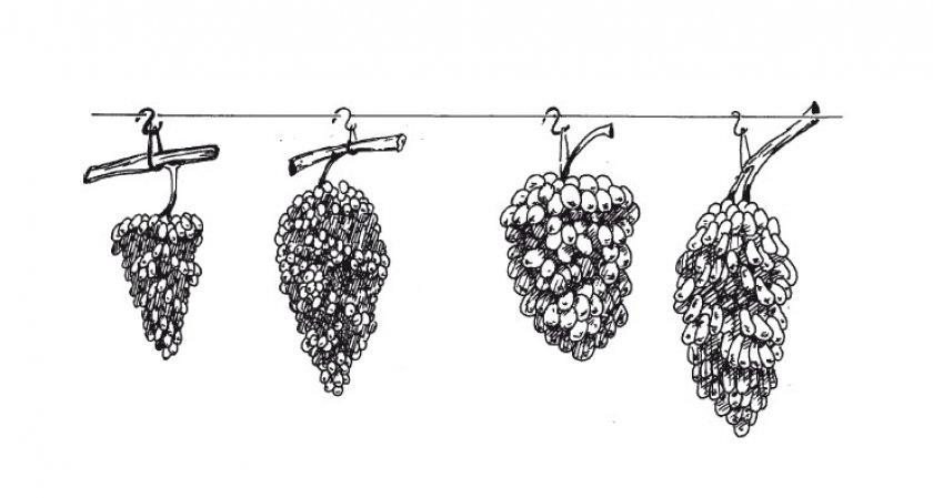Как правильно хранить виноград на зиму в домашних условиях