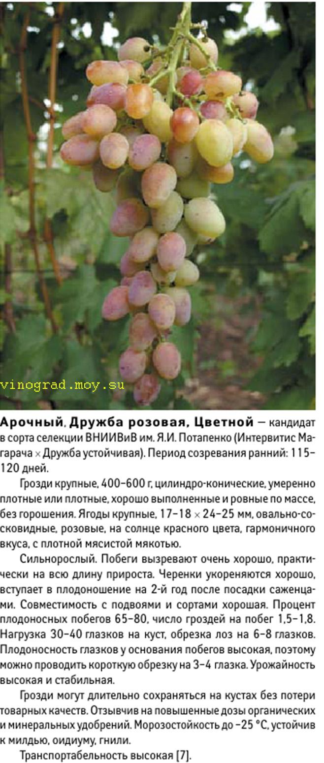 Виноград сенсация: сверхранний сорт отличного качества