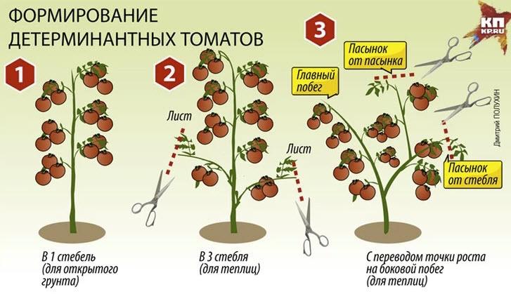 Сортовые особенности томата палка