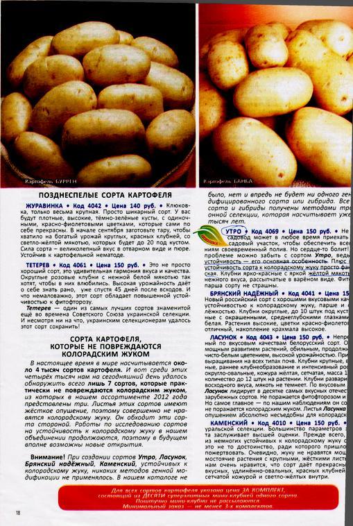 Картофель вектор: подробное описание сорта, вкусовые качества картошки, фото и отзывы тех, кто её выращивал