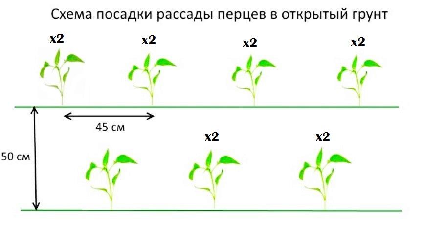 Как вырастить болгарский перец в теплице: нюансы и особенности посадки и ухода