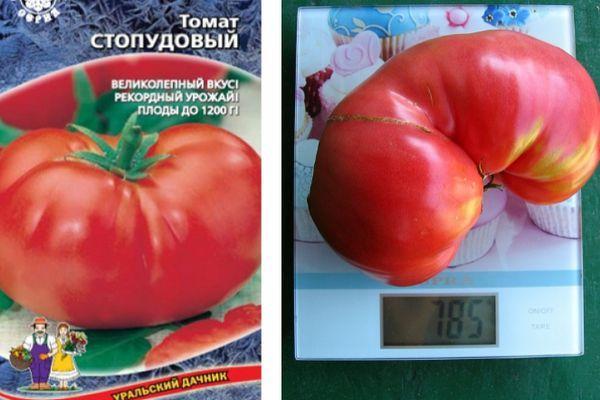 Томат пудовик: описание и характеристика сорта, отзывы, фото | tomatland.ru