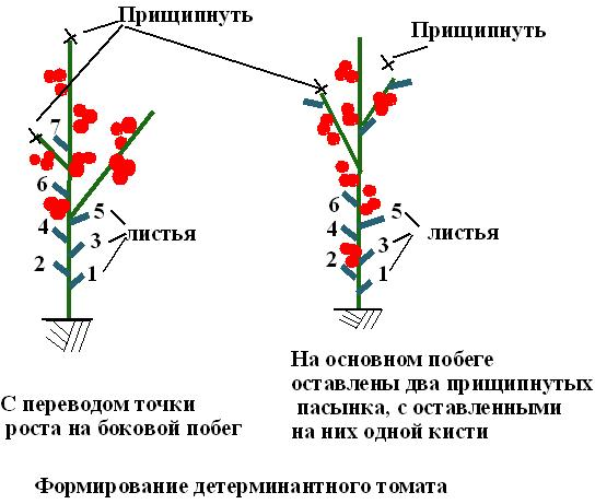 Пасынкование томатов в теплице - пошаговая схема