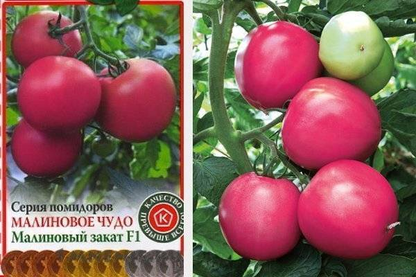 Томат розовый мед: описание и характеристика сорта, особенности выращивания помидоров, отзывы, фото