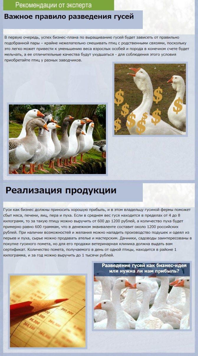Индоутка птица. описание, особенности, виды, уход и содержание индоуток