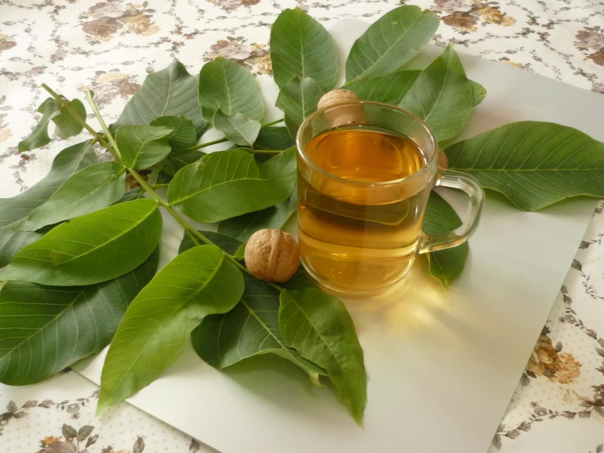 Листья грецкого ореха - польза, вред, показания и противопоказания к применению (видео + 115 фото)