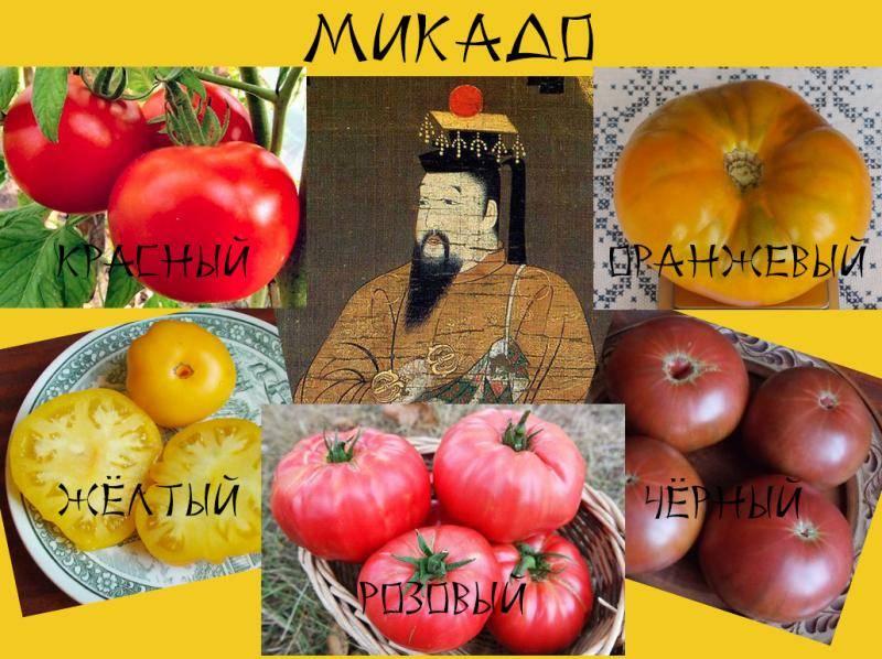 Томат микадо: характеристика и описание сорта, отзывы