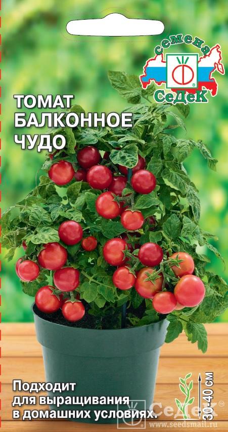 Как вырастить томаты балконное чудо