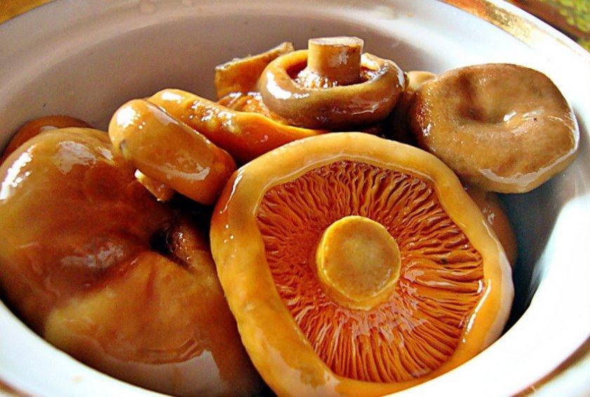 Как солить рыжики на зиму холодным и горячим способами: пошаговые рецепты под гнетом и с варкой