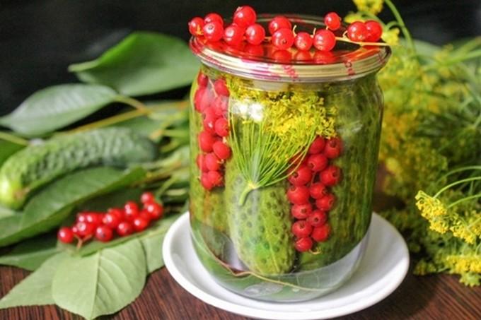 Огурцы с красной смородиной на зиму - рецепты для очень занятой мамы - страна мам