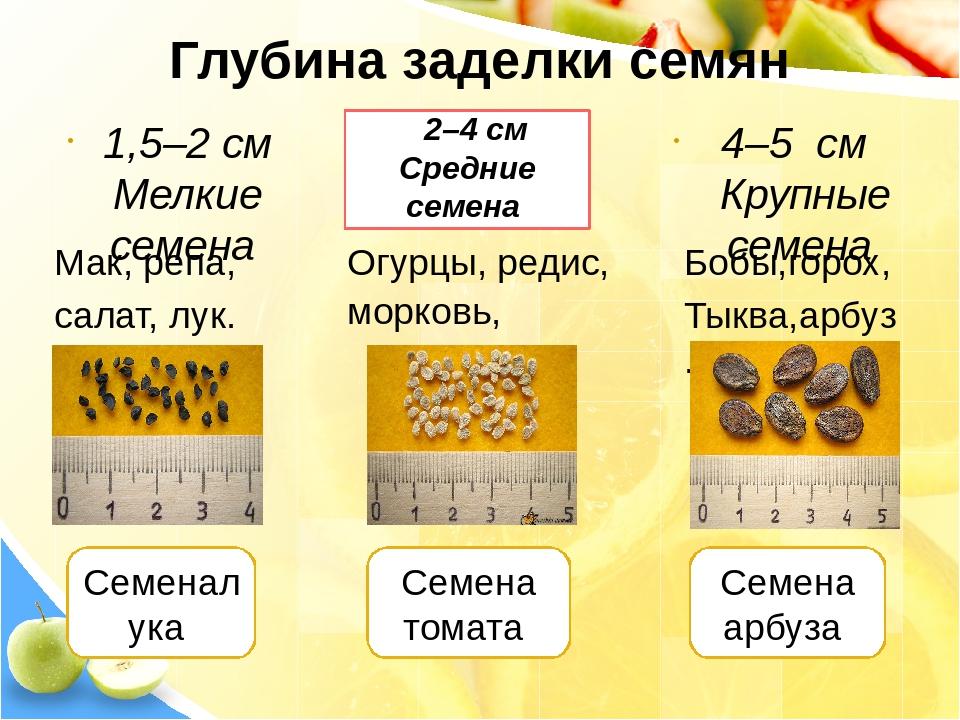 Как проверить семена томатов на всхожесть в домашних условиях