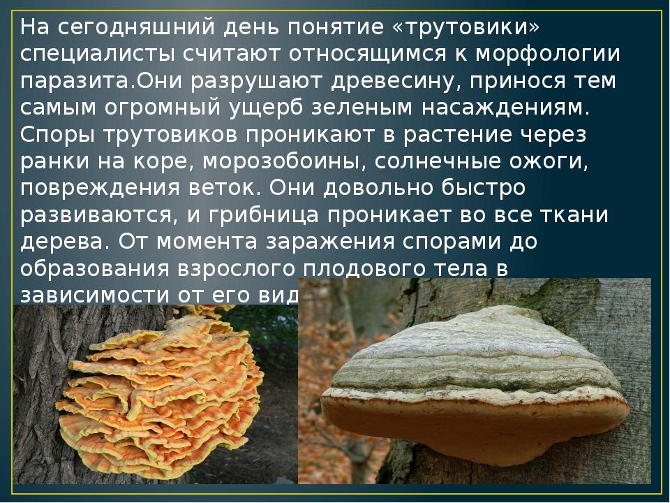 Триходерма: что это и зачем его выращивают дачники: новости, грибы, советы, огород, сад и огород