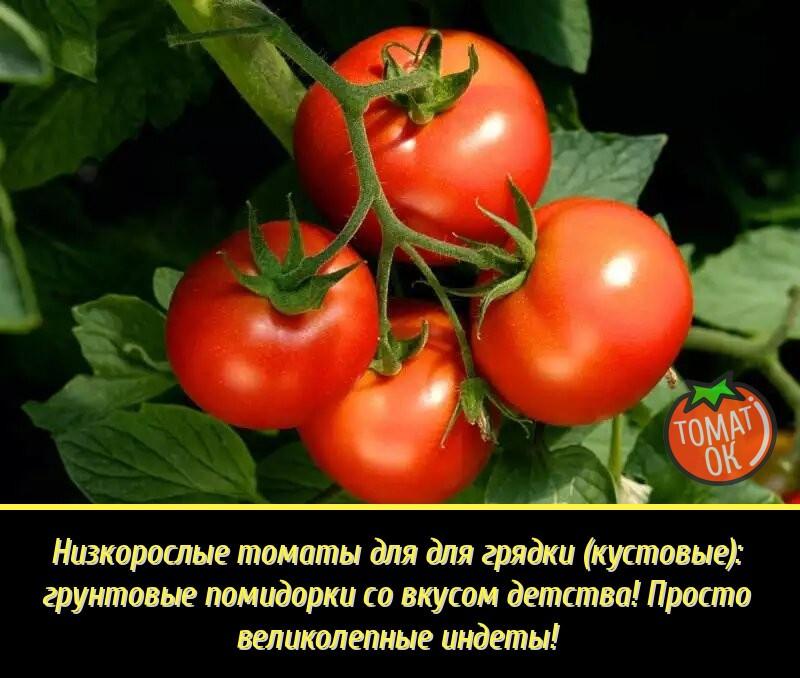 Тепличные сорта высокоурожайных томатов, стойкие к болезням: перечень самых популярных среди огородников в средней полосе россии гибридов русский фермер
