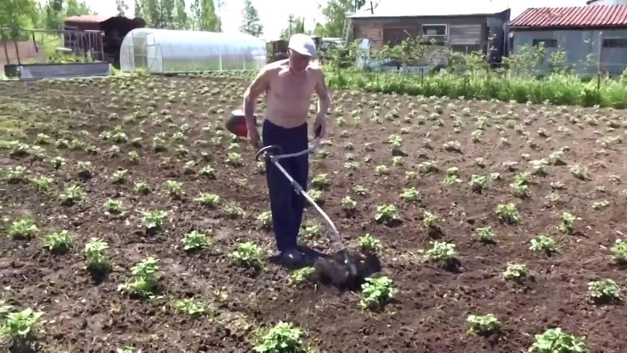 Как облегчить и ускорить работы при посадке картофеля с помощью культиватора