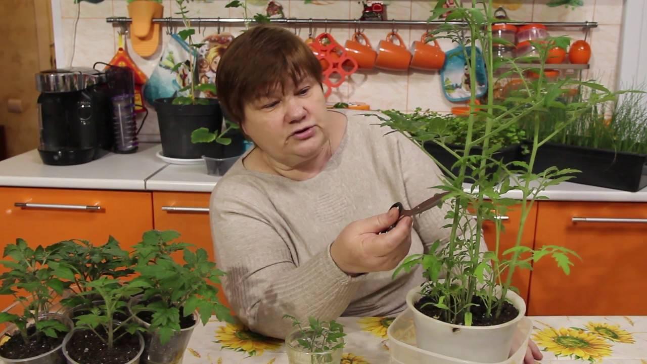 Посадка томатов в улитку на рассаду: как посеять и вырастить с видео