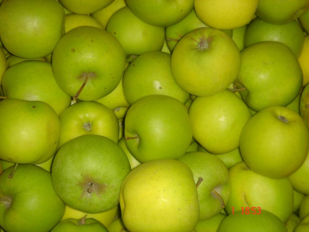 Описание сорта яблони ауксис: фото яблок, важные характеристики, урожайность с дерева