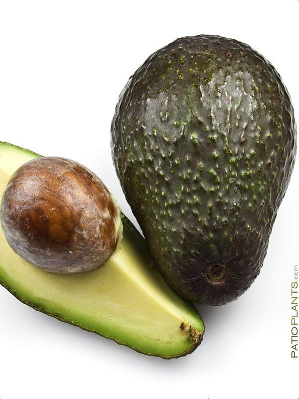 Необычный сорт авокадо — хасс (черный)