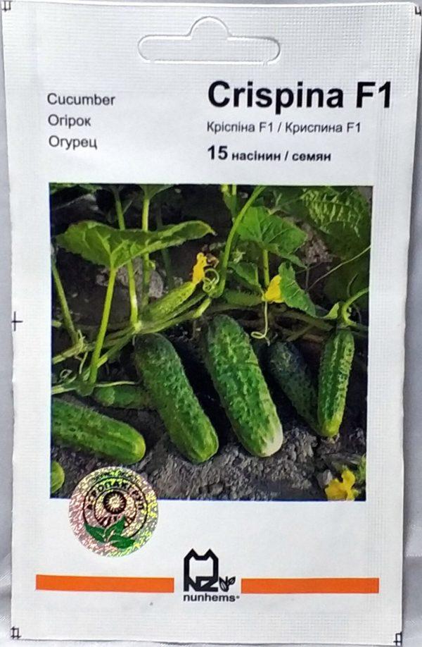 Огурец криспина f1: описание, фото, выращивание в открытом грунте - новости, статьи и обзоры
