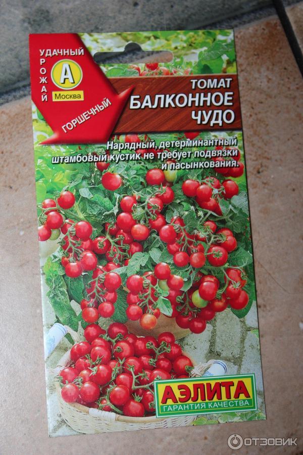 Помидоры балконное чудо: как выращивать, отзывы, характеристика и описание сорта