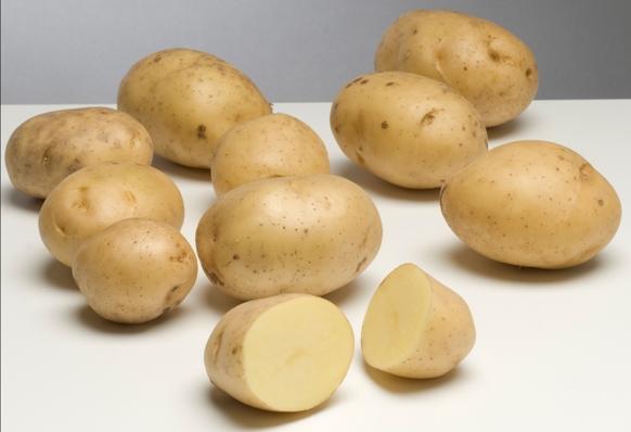 Сорта картошки 2021 года: описание лучших, выбор для регионов с фото