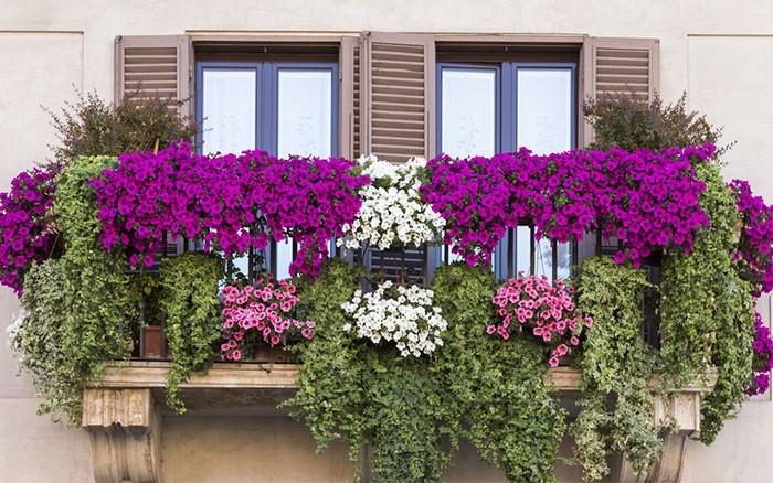 Тенелюбивые цветы для северного балкона, какие однолетники лучше выбрать