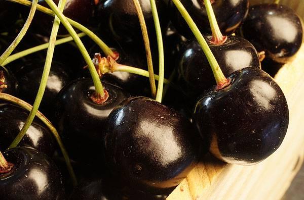 Черешня ленинградская черная — морозостойкий сорт, дающий до 40 кг плодов с дерева