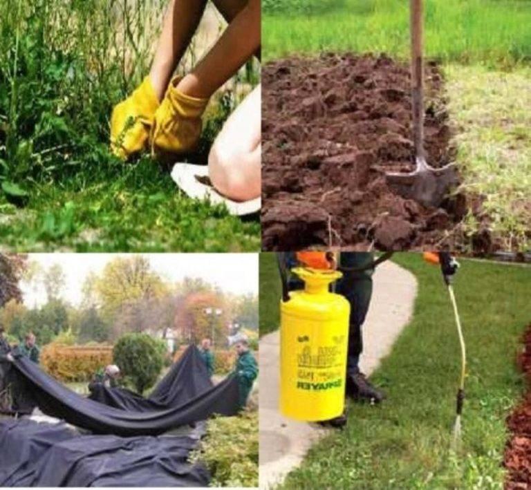 10 лучших средств от сорняков и травы, топ-10 рейтинг гербицидов