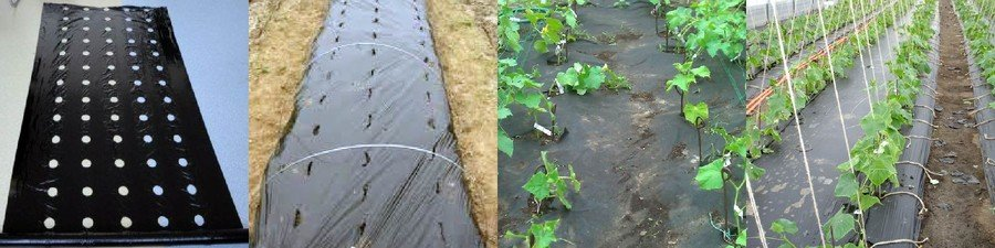 Как выращивать огурцы в парнике из укрывного материала