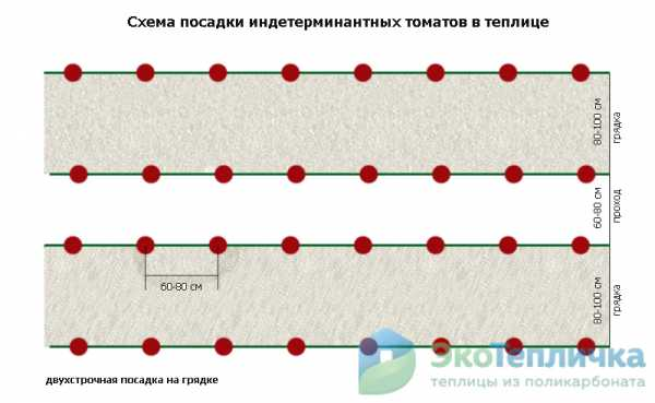 Схема посадки томатов в теплице 3х6: сколько томатов разместить, как посадить