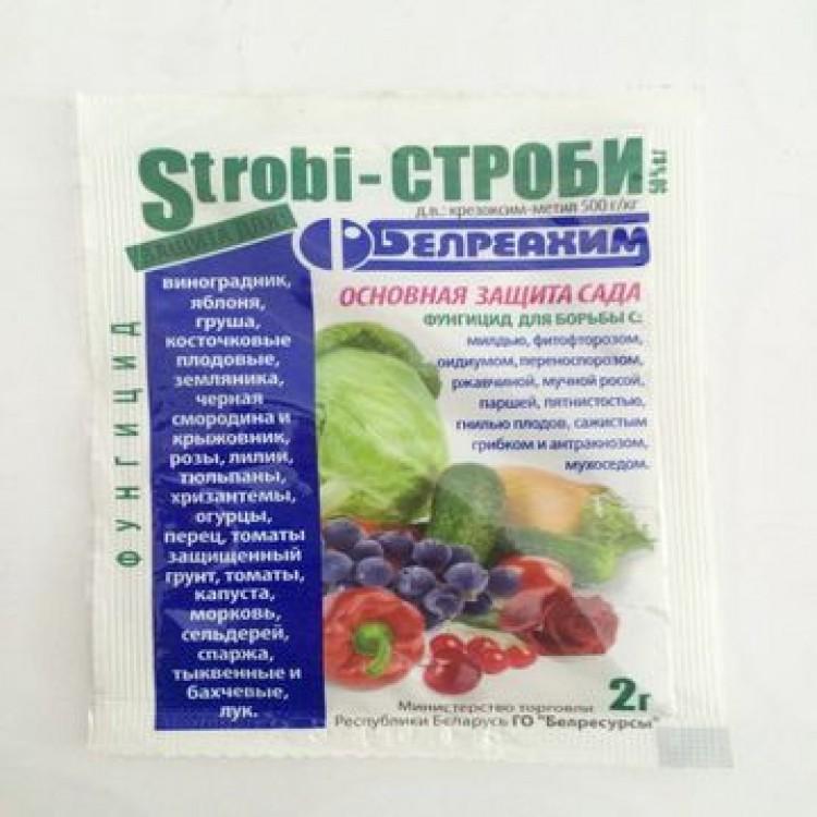 Фитоверм: инструкция по применению для огурцов, отзывы, как обработать в теплице и открытом грунте