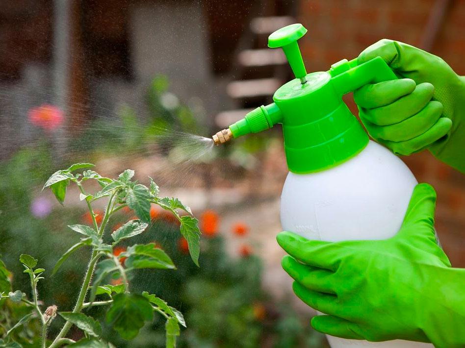 Народные средства от вредителей - рецепты без химии