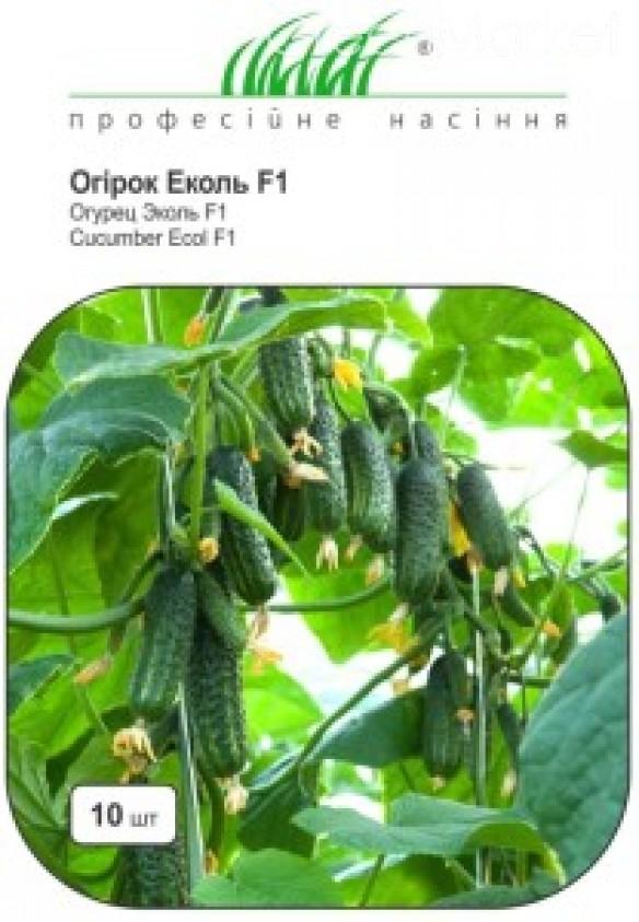 Огурец эколь f1: описание сорта, агротехника и отзывы
