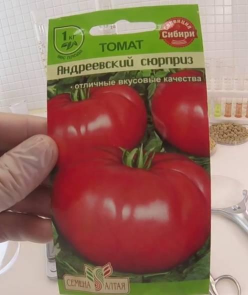 Комнатный сюрприз: как вырастить компактный томат дома | садоводство24