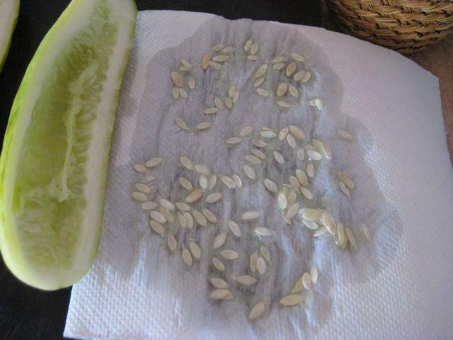 Как правильно собрать семена огурцов в домашних условиях своими руками