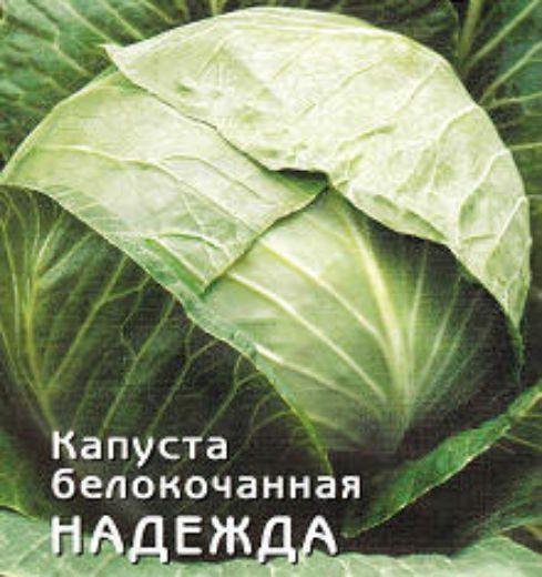 Капуста надежда: характеристика и описание сорта, выращивание и уход
