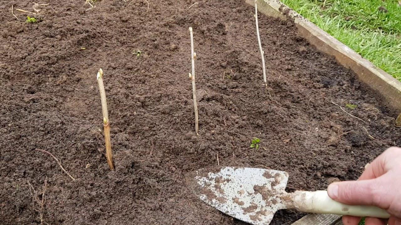 Подготовка почвы к посадке различных культур | cельхозпортал