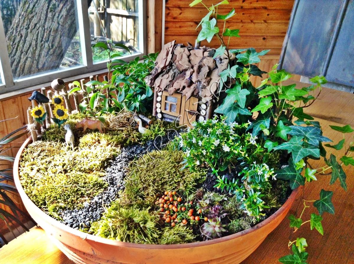 Цветочные композиции в горшках из комнатных растений