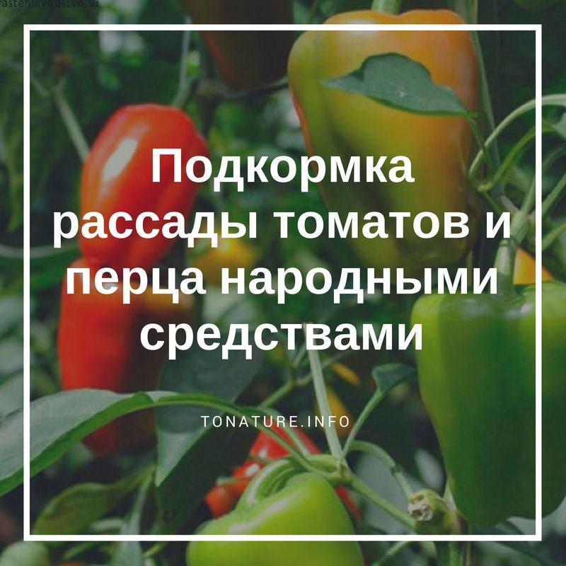 Чем лучше подкормить рассаду перца для роста, чтобы были толстенькие