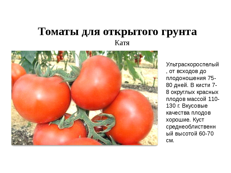 Томат самара: описание, характеристика, фото, отзывы | tomatland.ru