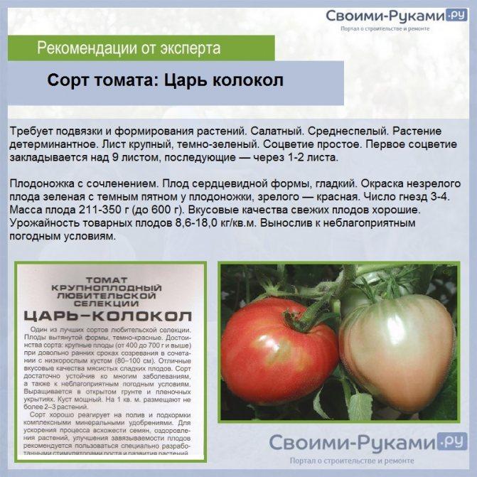 Детерминантный сорт томатов – что это такое и в чем их особенности