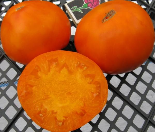 Томаты ананас: описание сорта и таких разновидностей, как черный, золотой, гавайский и бифтшекс, фото, особенности выращивания помидоров и их урожайность