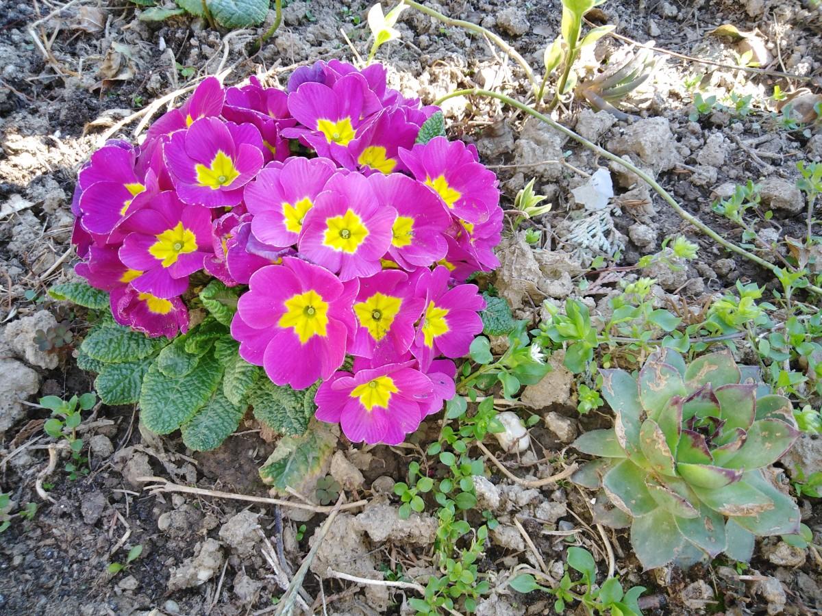 Цветы на даче - 75 фото особых и простых оформлений клумбы
