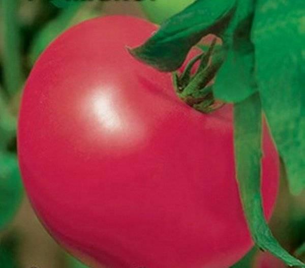 Томат афродита f1: характеристика и описание гибридного сорта с фото