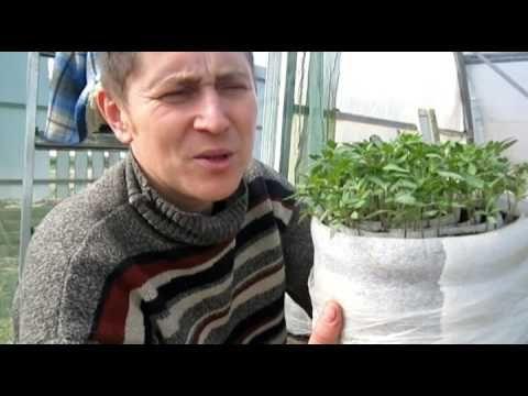 Рассада помидор в улитках и пеленках юлия миняева, видео